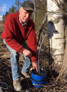Gunnar Frigård igang med å tappe bjørkesevje